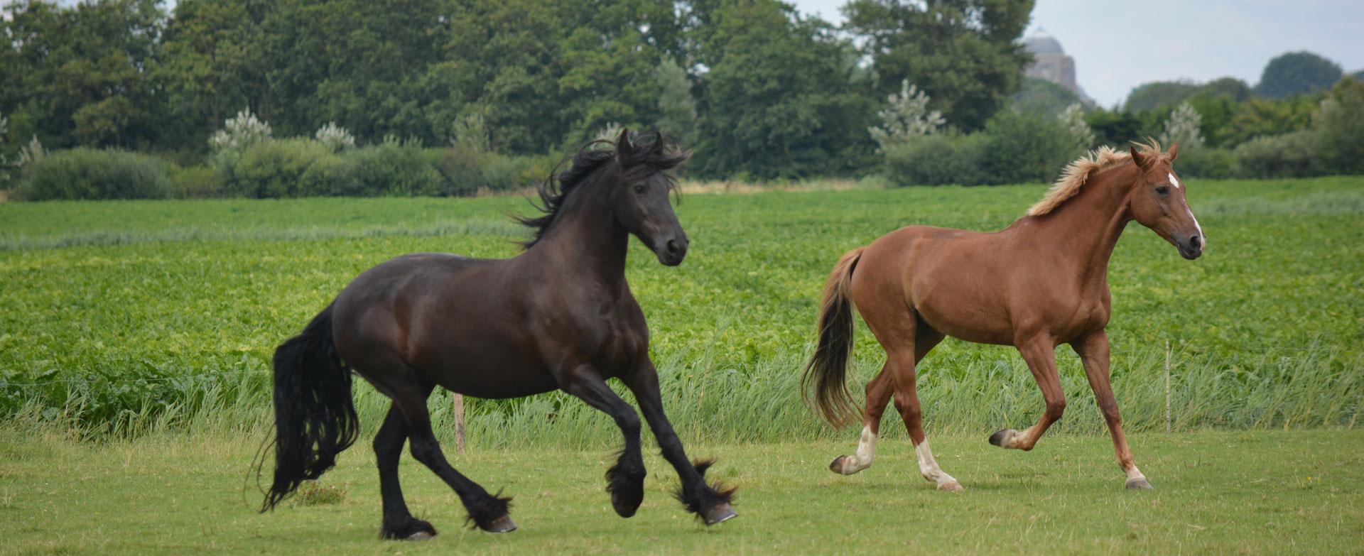 Paardenkracht naar EigenKracht